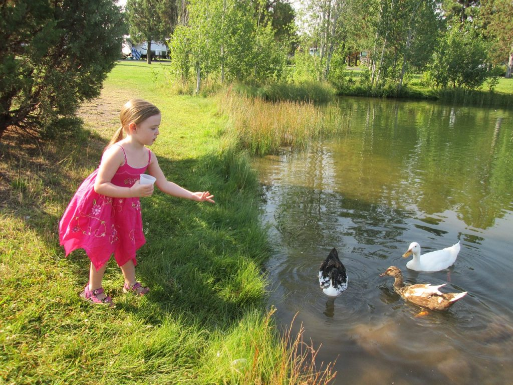 An image of a young girl feeding ducks, prior to arrest by the Gardaí for breaching lockdown rules.