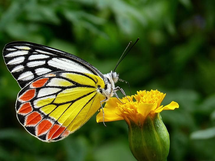 Butterflies are an important part of the myths and legends from Irish folklore.