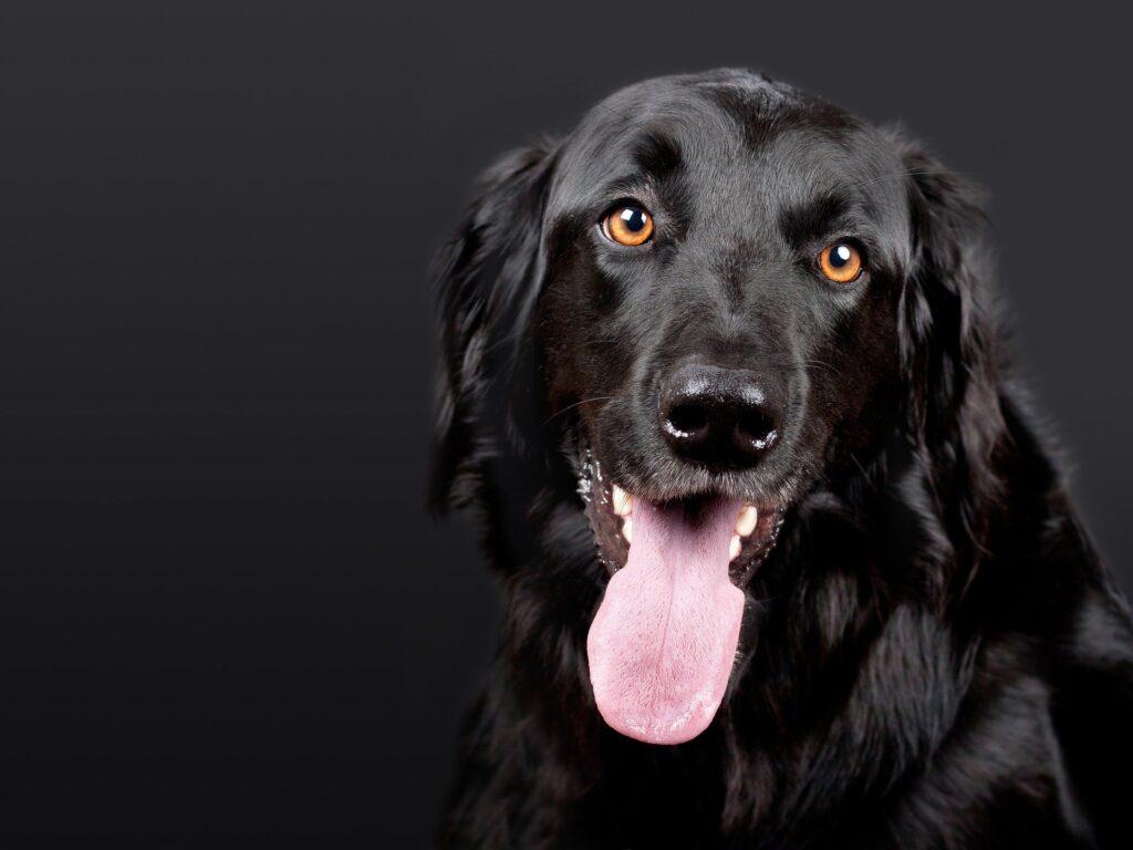 Keira is one of the best Irish female dog names.