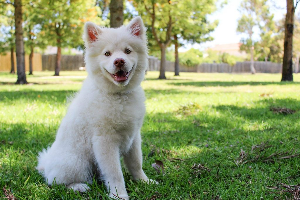 Fiona is one of the cutest Irish female dog names.