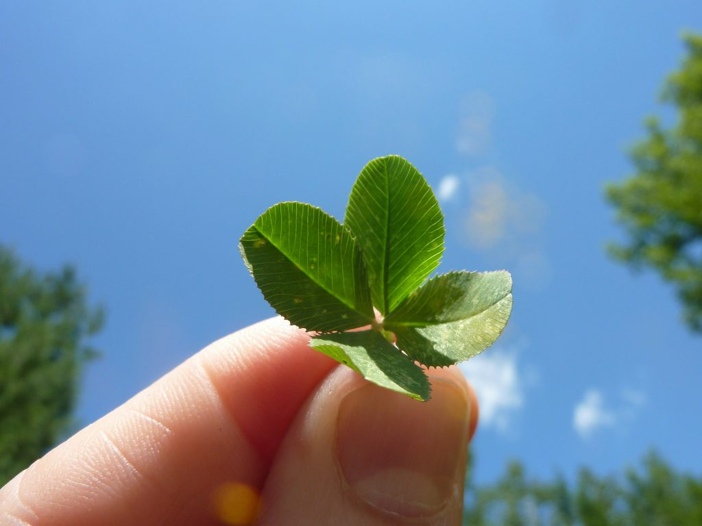 Are shamrocks and four-leafed clovers the same?