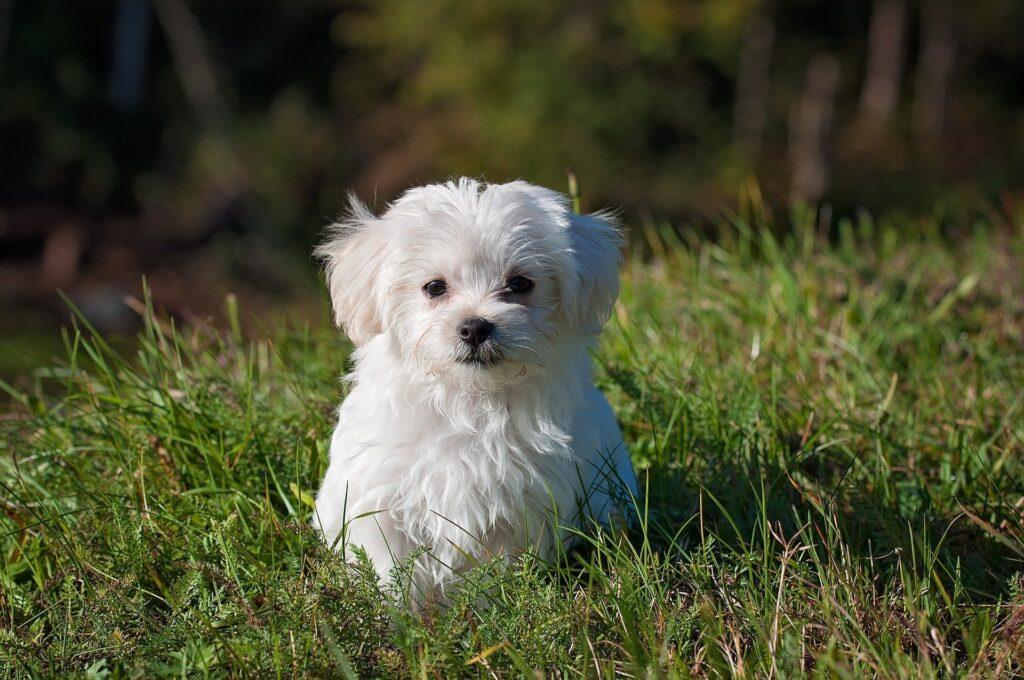 Dorotea would suit a little dog.