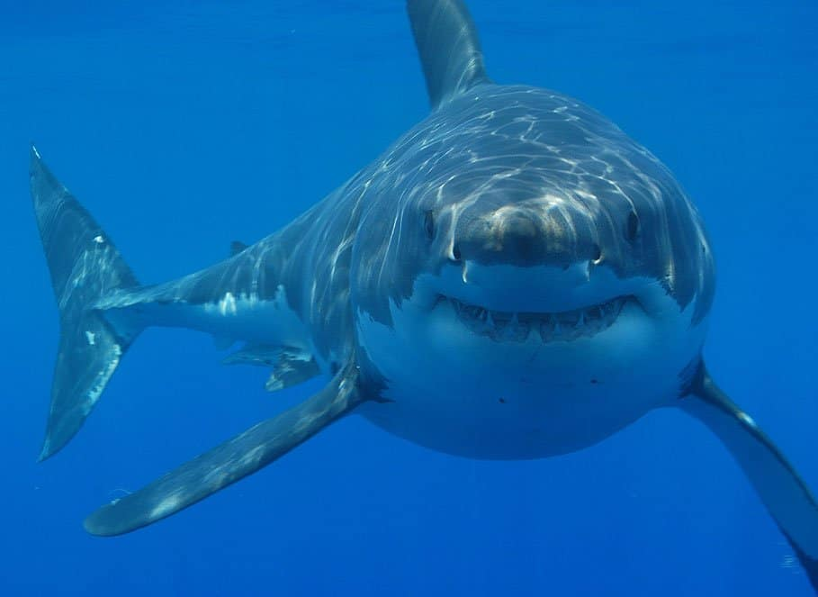 Ruari McSorely was bitten by a shark in Dubai.